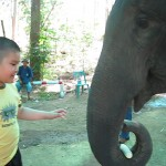 Save the elephants! Treat autism?